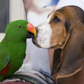 Professional Pet Sitters of MN - We can take care of your parrot!