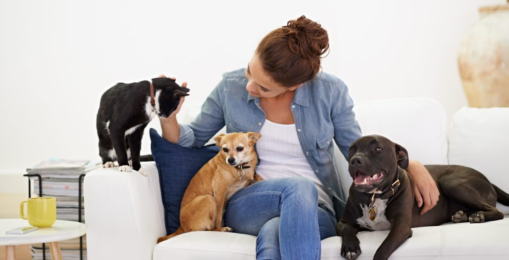 Professional Pet Sitters of Minnesota - Why Use A Professional Sitter