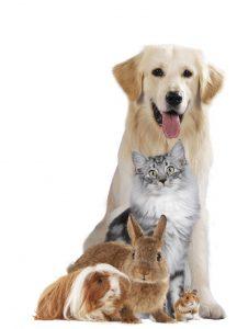 Professional Pet Sitters of Minnesota Board